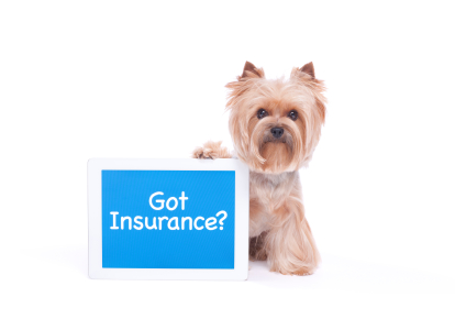 Pet Insurance For Your Staffordshire Bull Terrier